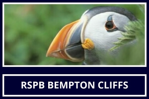 Local Attraction RSPB Bempton Cliffs featured by St Hilda Guest House Bridlington